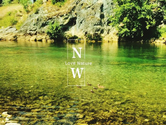 nature Water Tree Lake Reflection Day Outdoors No People Green Color Beauty In Nature Close-up