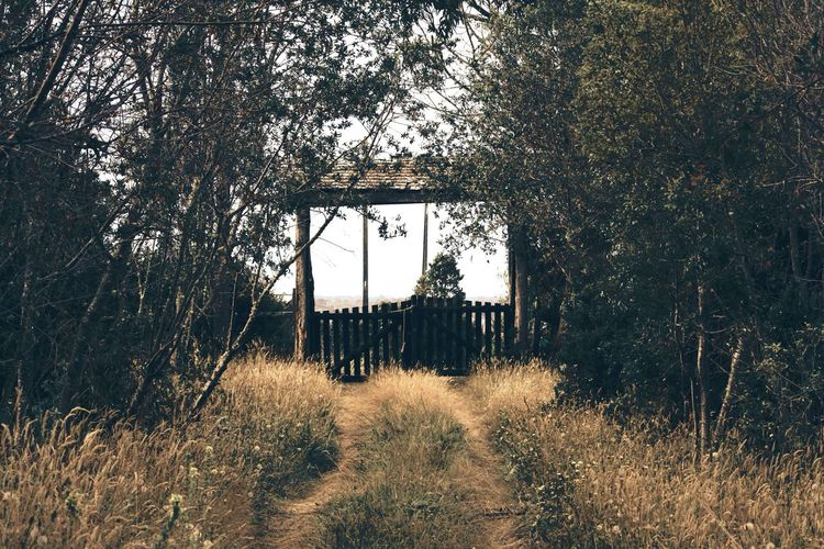 Casa en Chacao, Chiloé. Tree Growth Nature No People Day Outdoors Forest Built Structure Beauty In Nature Grass Architecture Sky Wood Green Cloudy Entrance Gate Door Lonely
