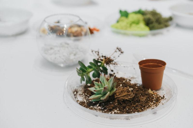 Terrarium class. Succulent Plant Succulents Bowl Roots Arrangement Terrarium Terrarium On Table Terrarium Plant Plants Herb Close-up
