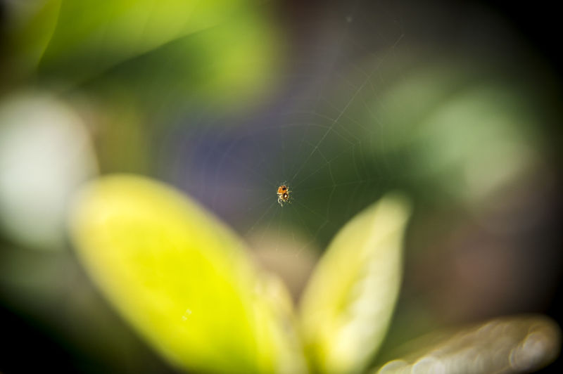 Nano Spider Beauty In Nature Close-up Focus On Foreground Freshness Insect Macro Macro Photography Nano Spider No People Spider Web