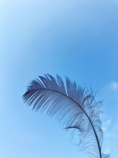 Sky Blue Nature