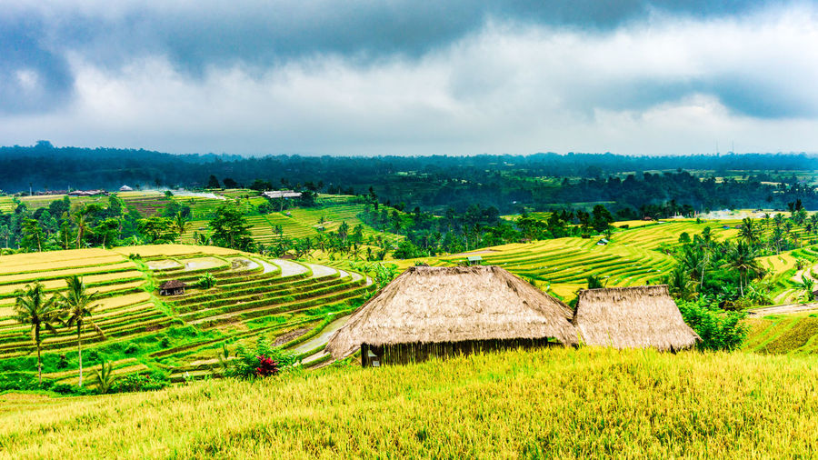 Jatiluwih Rice Terrace 2 Bali INDONESIA Jatiluwih Rice Terrace UNESCO World Heritage Site Agriculture Beauty In Nature Day Farm Field Landscape Nature Outdoors Rice Paddy Rice Terraces Rural Scene Scenics Tranquil Scene Tranquility