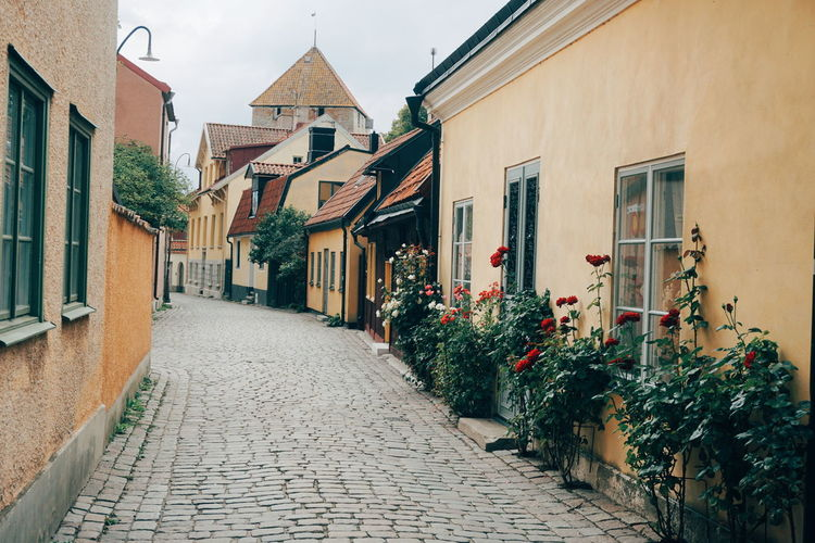 Flowering plants in alley amidst houses