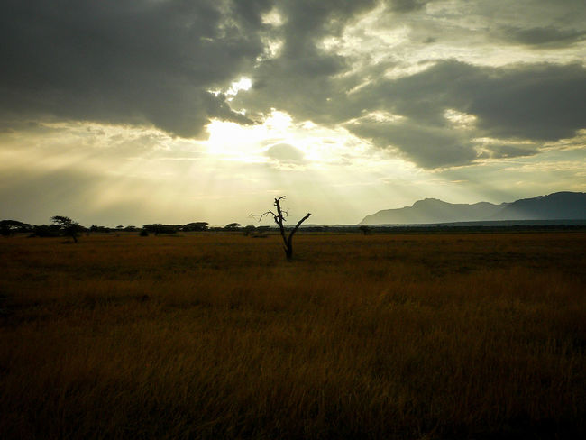 Shaba National Reserve in Northern Kenya Kenya The Week On EyeEm Africa Animal Themes Beauty In Nature Cloud - Sky Day Field Grass Landscape Mountain Nature Outdoors Safari Scenics Silhouette Sky Sunset Tourism Tranquil Scene Tranquility Travel Destinations Tree Perspectives On Nature