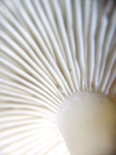 Close-up Food And Drink Indoors  Food No People Freshness Day Mushroom Gills Mushrooms Macro Macro Photography EyeEm Gallery EyeEm Nature Lover Nature Nature_collection White Outdoors Fresh Idaho Idahome Wet Rural