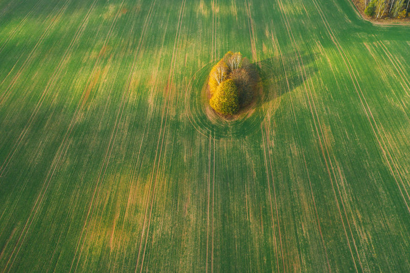 Tree top aerial view on the plowed field. beauty in nature concept image.