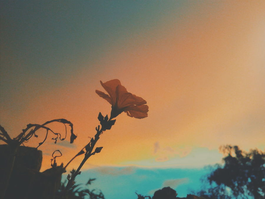 Sunset No People Spooky Outdoors Nature Sky Beauty In Nature Day Flying Tree Rethink Things Be. Ready. Perspectives On Nature EyeEm Nature Lover EyeEmNewHere EyeEm Best Shots Eyem Best Shots VSCOPH Vscocam Outdoor Photography VSCO Cam Photography Tree Flower Leisure Activity Growth TurnUpTheBrightness