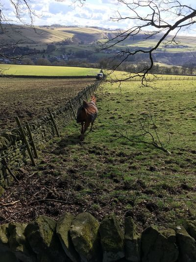 Horse running across a field in Eyam Running Horse Stoney Middleton Eyam Field Land Plant Growth Landscape Agriculture Nature Environment Green Color Beauty In Nature Scenics - Nature Domestic Animals Animal Day Mammal Animal Themes Vertebrate Rural Scene Sky Farm