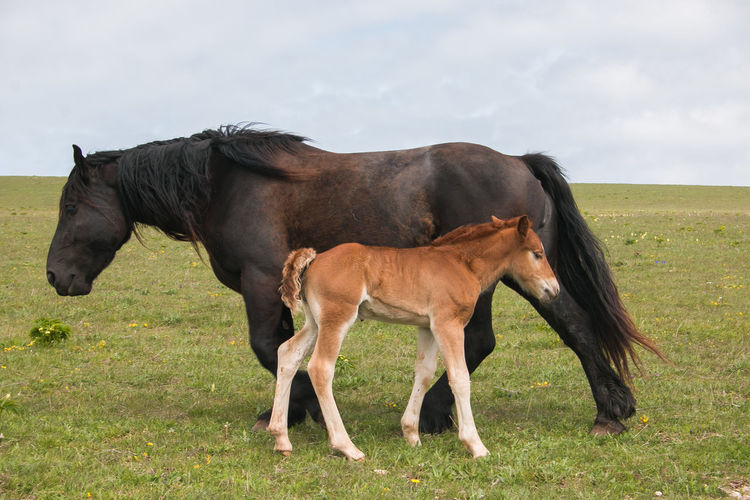 Portrait of black mare with her baby foal Foal Horse Animal Horses Horse Photography  Baby Mare Black Black Horse Puppy Mom Mother Mountain Nature Landscape Freedom Free Farm Farmland Mane Western Manequin Livestock Umbria Italy Europe Mammal Domestic Animals Animal Themes Domestic Grass Land Field Vertebrate Herbivorous Outdoors Animal Wildlife Day No People Side View