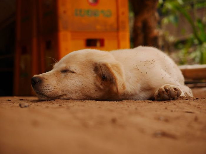 Dog Dogs Doglover Dog Life Dog Sleeping  Sand