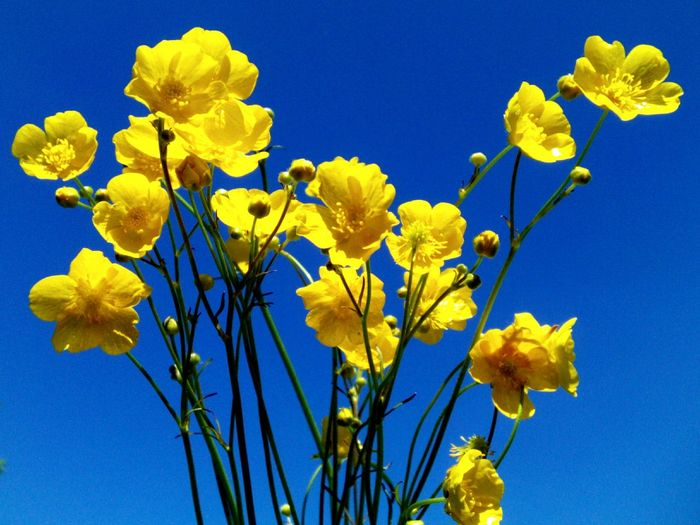 Close-up of yellow flowers blooming against blue sky