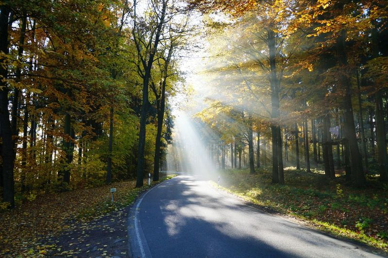 Sunbeams Streaming Through Autumn Trees On Empty Road In Forest