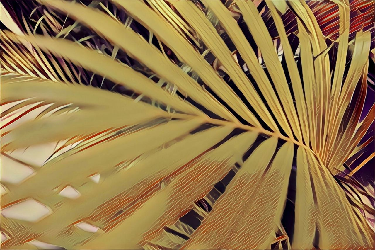 full frame, backgrounds, no people, close-up, palm tree, pattern, palm leaf, growth, indoors, frond, tropical climate, leaf, plant, still life, abundance, day, yellow, large group of objects, detail, plant part