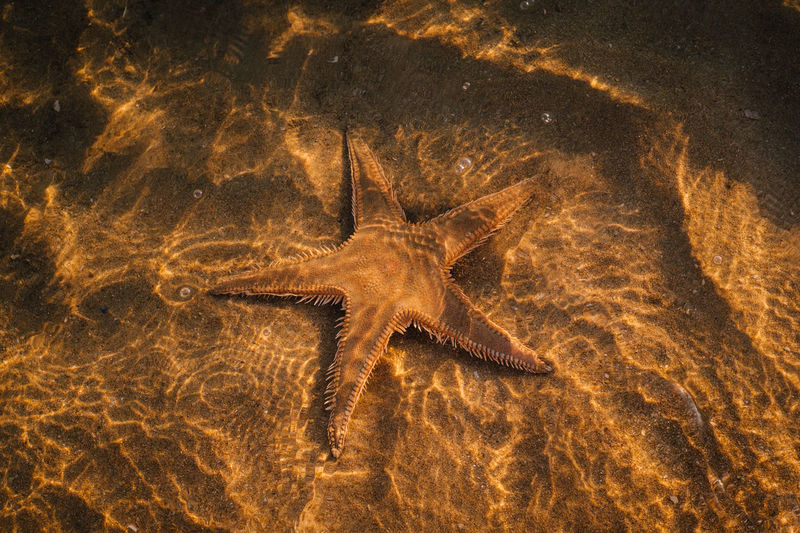 High angle view of starfish in river