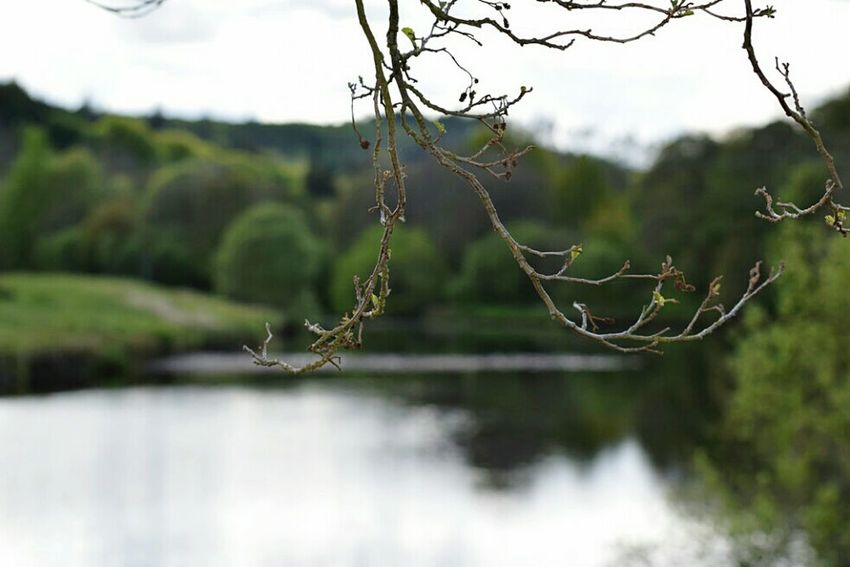 Focus Wildlife & Nature Just Taking Pictures Check This Out Mypic Taking Photos Bellingham Northumberland Justgoshoot Country Life EyeEm Best Shots Riverside Rivertyne NoEditNoFilter Myphoto Great Outdoors - 2016 EyeEm Awards