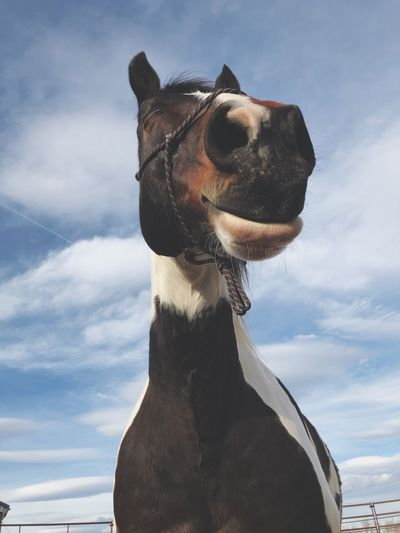 Contentment Horse Photography  Horse Sky Cloud - Sky Animal Themes Animal Nature One Animal Mammal Day No People Domestic Animals Representation Low Angle View Digital Composite Animal Representation