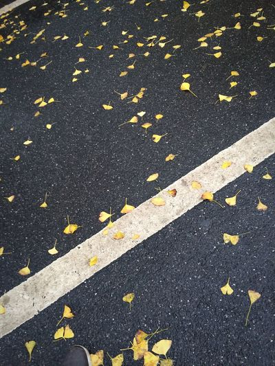 Autumn Fallen Leaves Tree Road