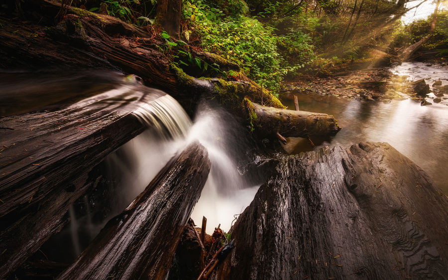 A different view of the waterfall. Landscape_Collection Nature Photography Beauty In Nature Blurred Motion Day Falls Flowing Water Forest Forest Photography Forest Trees Landscape Landscape_photography Long Exposure Motion Nature Nature_collection No People Outdoors River Scenics Tranquility Travel Destinations Tree Water Waterfall
