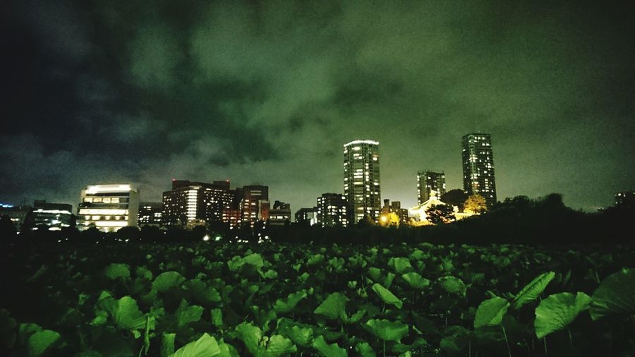 Nightphotography AndroidPhotography Smartphonephotography Tokyo Ueno Tokyo Japan Uenopark Night Park Park View Day Dark Sky Night Lights Green