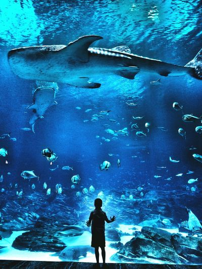 My Son ❤ Georgia Aquarium  Whale Shark Young Minds Sea Creatures Sharks Rays Fish EyeEm Best Shots Eyemphotography Check This Out