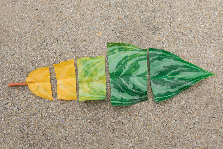 Beach Close-up Day Directly Above Flag Food Food And Drink Green Color High Angle View Land Leaf Leaves Nature No People Outdoors Plant Part Plastic Sand Season Change Still Life Water Yellow