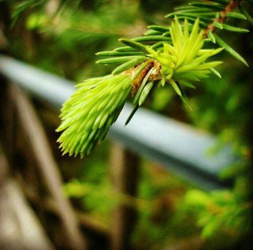 Instapic Instagood Instamood Instalike Instagram Spring Tree Macro Macrophotography Like Love Beautiful Nice Sony VSCO Vscocam Vscorussia