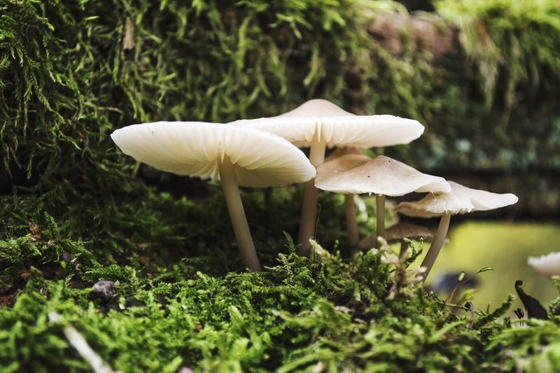 Mushrooms growing in forest