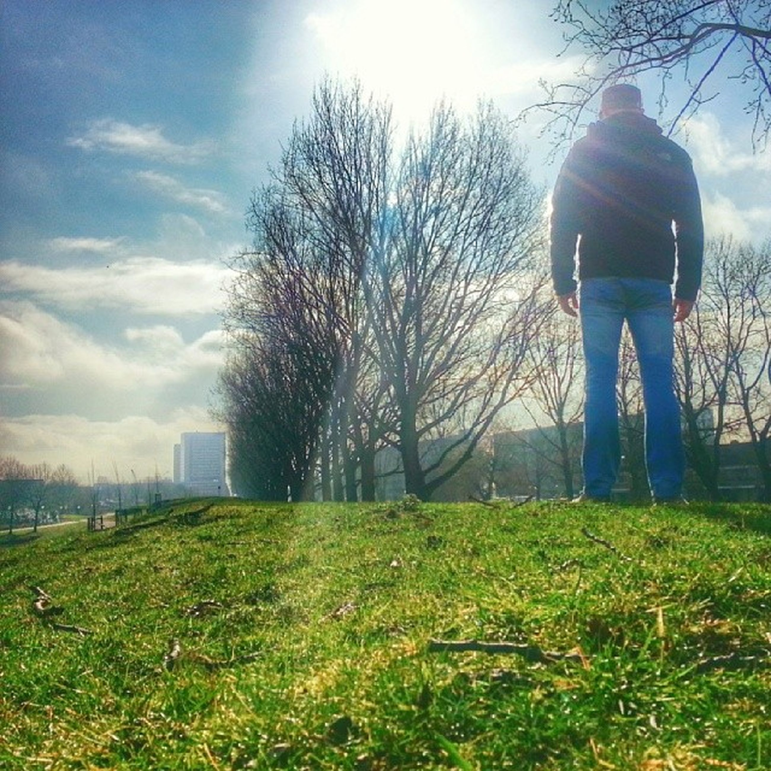 grass, lifestyles, full length, leisure activity, field, tree, sky, rear view, standing, bare tree, men, grassy, casual clothing, landscape, nature, person, tranquility, sunlight
