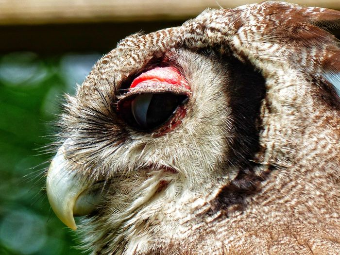 EyeEm Selects One Animal Close-up Side Profile Animal Themes No People Nature Head Of On OWL Outdoors Photograpghy  Eyeemphotography From My Point Of View July2017 EyeEm Nature Lover Bird Photography