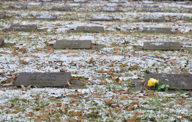 Buried Cemetery Day Friedhof Nature No People Outdoors Rosé Trauer
