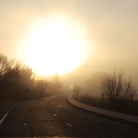 The sun barely shines through the fog Fog Tree The Way Forward Sun Road Beauty Dawn Beauty In Nature Nature No People Scenics Outdoors Sky Winding Road Day