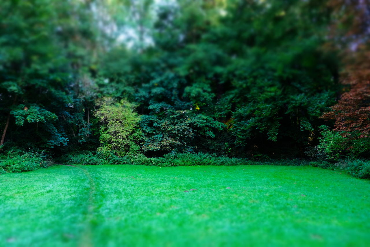 plant, green color, tree, grass, no people, land, selective focus, growth, nature, tranquility, beauty in nature, day, scenics - nature, lush foliage, foliage, outdoors, field, sport, tranquil scene, forest