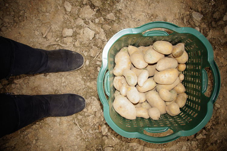 Low section of person standing by potatoes in basket on ground