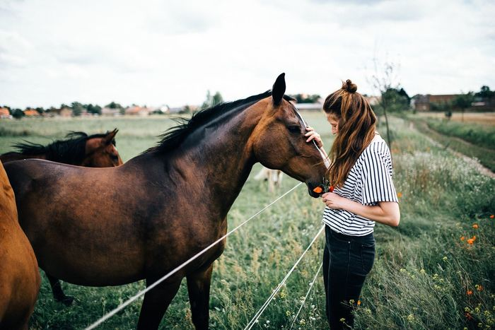 - Pferdeliebe - Horse Domestic Animals Togetherness Bonding Love Field Mammal Horseback Riding Livestock Agriculture Human Body Part Human Hand Day Sky Brandenburg Outdoors Real People Friendship Women Grass EyeEm Selects Flowers Portrait EyeEm Best Shots Investing In Quality Of Life The Week On EyeEm