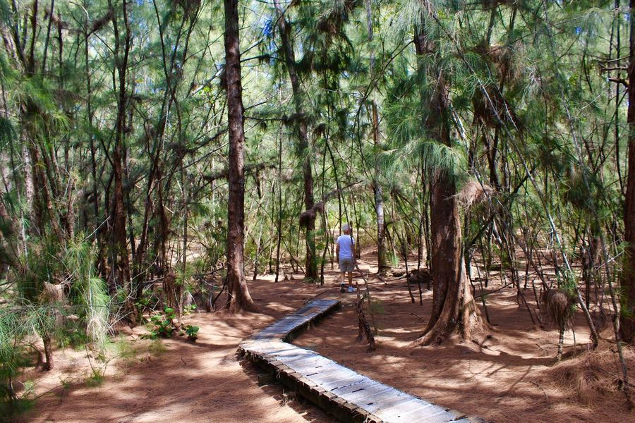 Beauty In Nature Forest Forest Photography Lush Foliage Lush Greenery One Men Path Way Pathway In The Forest Tree_collection  Trees