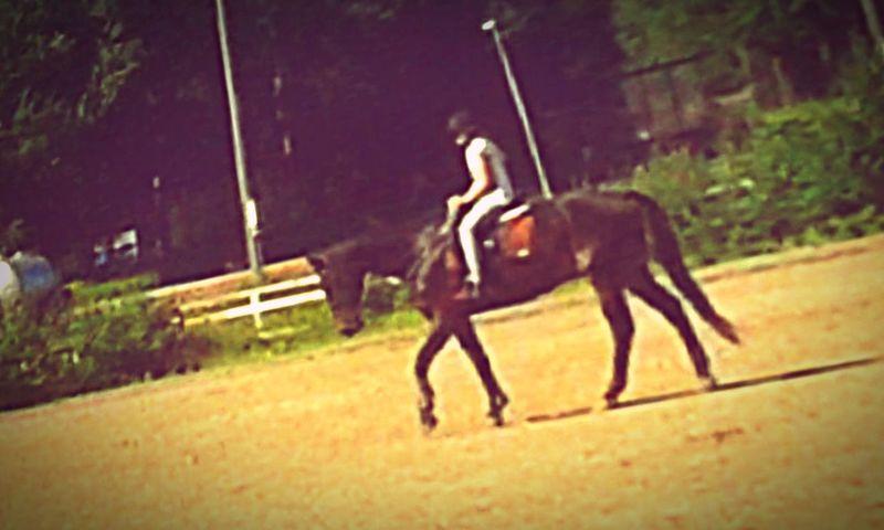 Me riding whooo Bighorse I Love Horses 🐴👍🏻horse Horses
