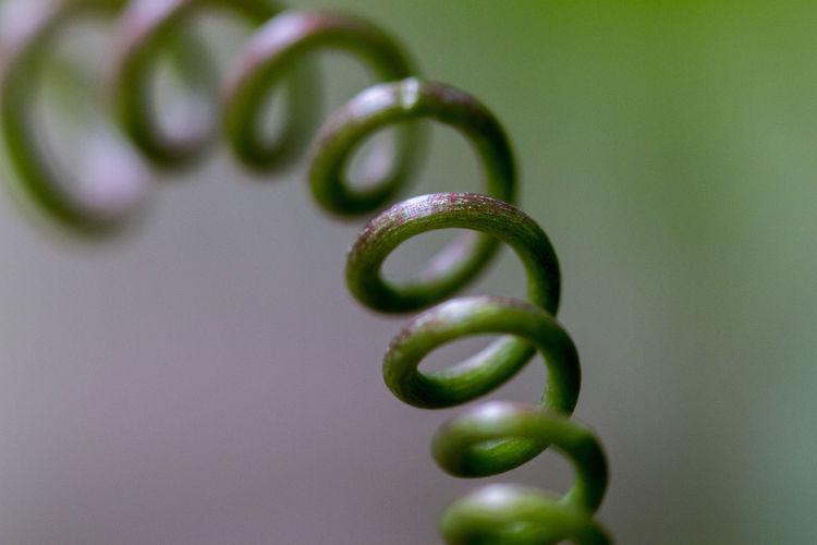 Close-up of spiral leaf