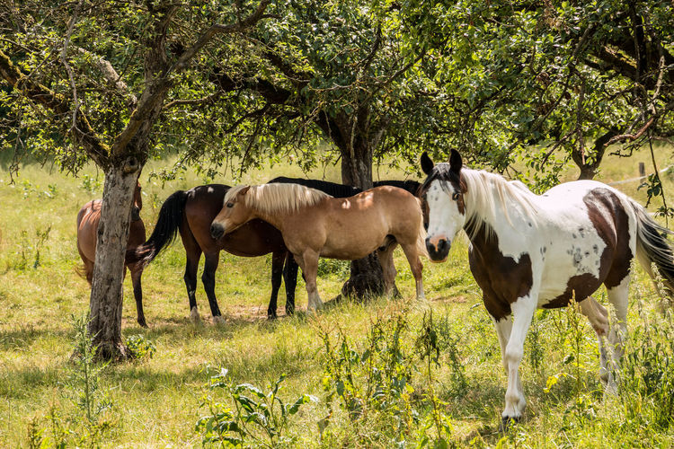 Horses on the green meadow Animal Animal Family Animal Themes Animal Wildlife Day Domestic Domestic Animals Field Grass Group Of Animals Herbivorous Horse Land Livestock Mammal Nature No People Outdoors Pets Plant Standing Tree Vertebrate