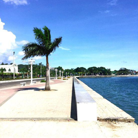 Palm Tree Boulevard Zamboanga City Street Lights