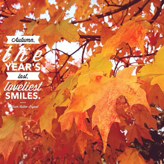 Magnificent Autumn! Autumn Leaves Nature