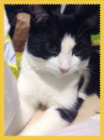 Lily ? Cat EyeEm Best Shots Blackandwhite Ilovemycat