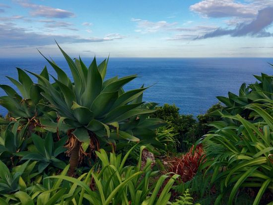 Nature Growth Sea Plant Cactus Beauty In Nature No People Horizon Over Water Water Sky Day