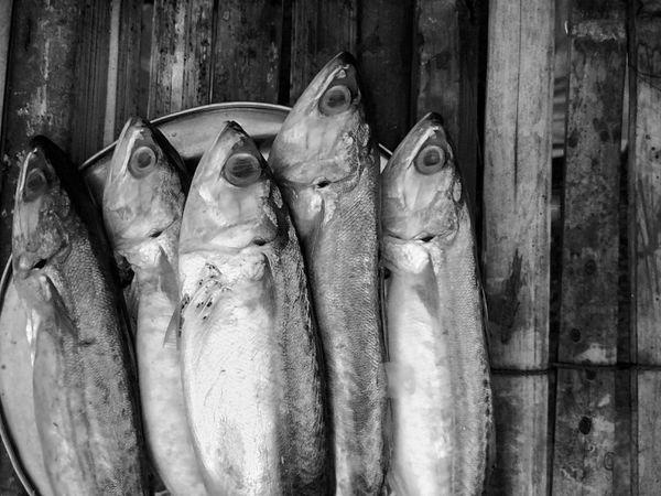 Fish Fish Sale Mackerel Mackerel Fish Close Up Close Up Photography Close Up Collection Close Up Fish Black And White Black And White Photography Black And White Collection  Black And White Fish For Sale Fish