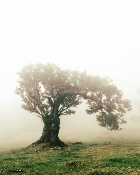 the enchanted forest Beautiful Copy Space EyeEm Best Shots EyeEm Nature Lover Landscape_Collection Natural Beauty Travel Tree Trees Beauty In Nature Environment Fog Forest Landscape Mood Nature Outdoors Scenics - Nature Tranquility Travel Destinations