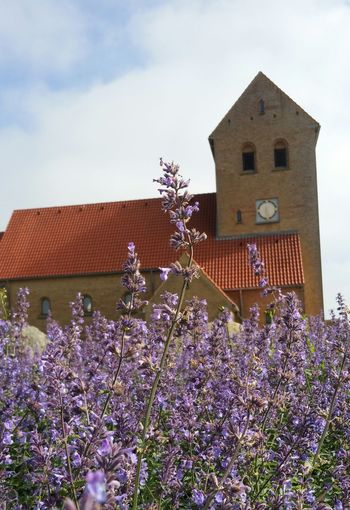 Hvide Sande Religion Building Exterior Architecture Outdoors Nature Sky Flower No People My Point Of View Beautiful Place Denmark Danmark Dänemark Clouds And Sky Beauty In Nature Lavendel Lavender Flowers Kirke Church Tower Walking Around Been There.