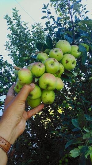 Apple Aples Aplle Tree Flowers Turkishfollowers Aniyakala Check This Out Manzara Aplacetorelax