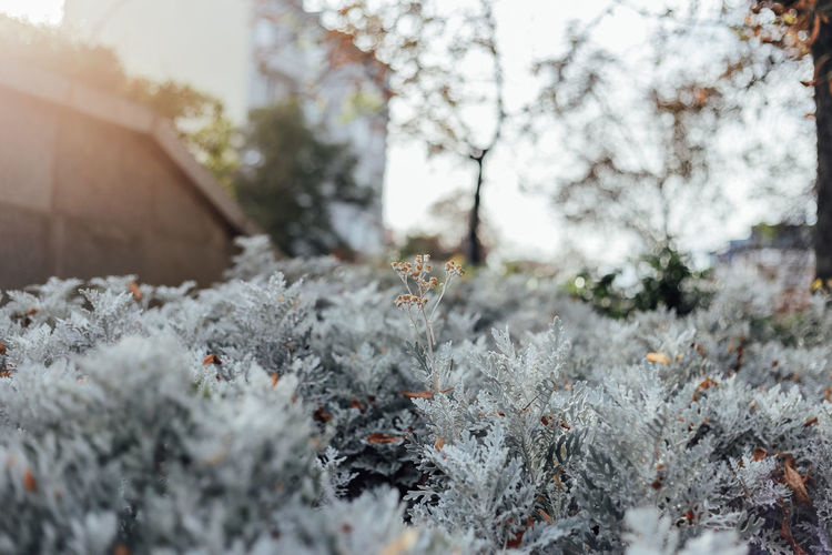 Plant Cold Temperature Winter Tree Nature Day No People Selective Focus Beauty In Nature Covering Close-up Growth White Color Outdoors Tranquility Focus On Foreground Land Daylight Outstanding Grey