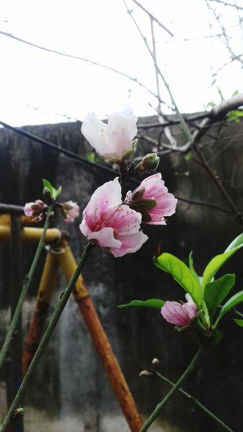 ♡ Flowers Matamoros Tamaultimas Mexico árbol Flores Plants Plant Inspiration Nature Day