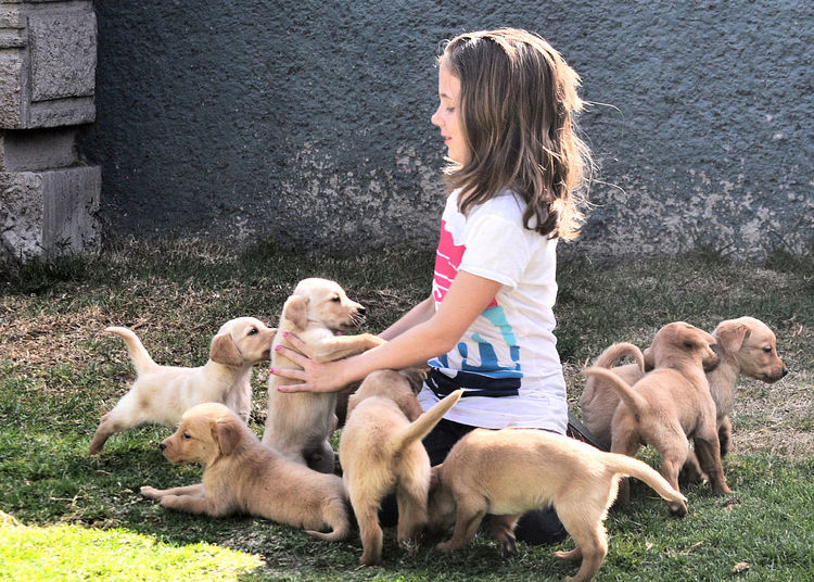 Girl playing with puppies on field