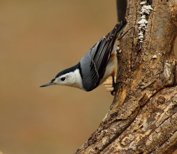 One Animal Animal Themes Animal Vertebrate Animal Wildlife Bird Animals In The Wild Close-up Tree No People Focus On Foreground Tree Trunk Trunk Woodpecker Nature Perching Side View Day Outdoors Plant Profile View
